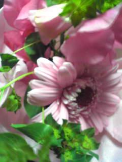 Blume_von_takahiro090312